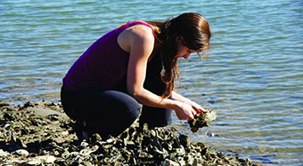 How oysters really build their shells at Clemson University, South Carolina