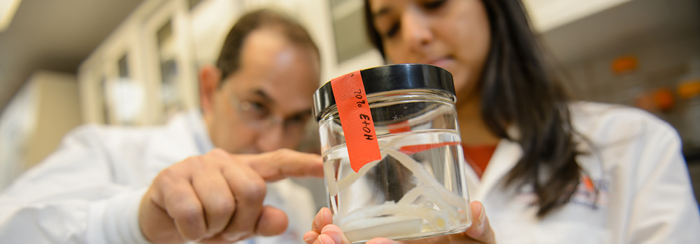 Bioengineering research at Clemson University, South Carolina