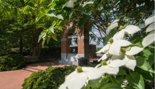 Dogwood trees bloom in the Carillon Garden.