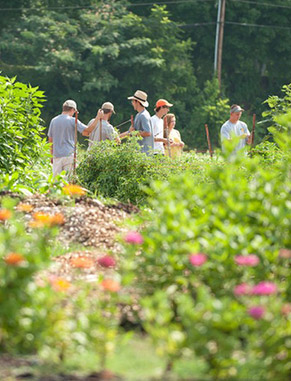 Clemson's Student Organic Farm began as a small market garden in 2001 in a section of campus with a deep agricultural heritage. The farm - now ranked as one of the nation's best - was certified organic in 2005 and covers 15 acres.
