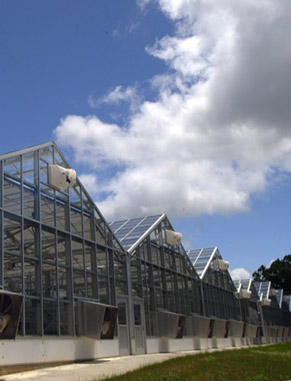 Within Clemson's elaborate greenhouses, space is dedicated to turfgrass research and teaching. You'll be able to get in on the action and perform research in root physiology, pest management and developing sustainable turf varieties.