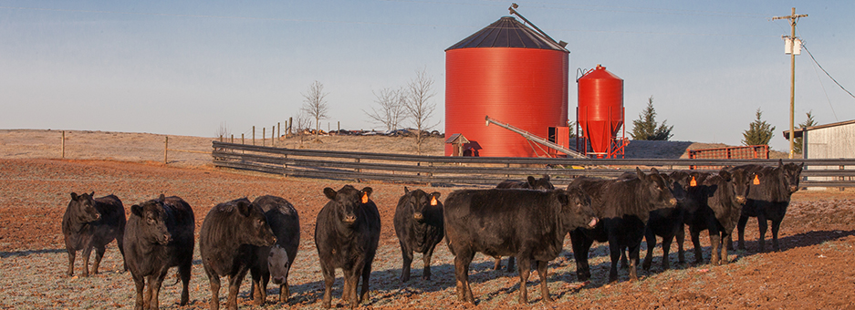 Livestock & Forages Home | College of Agriculture, Forestry