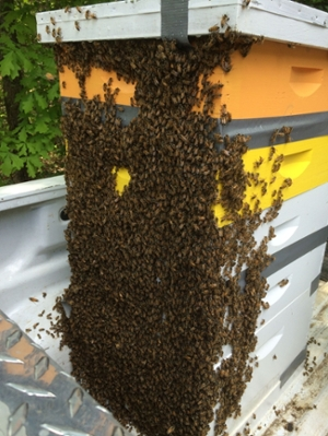 News From Clemson S Apiculture Program College Of