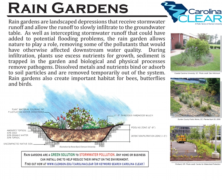Rain Gardens College Of Agriculture Forestry And Life