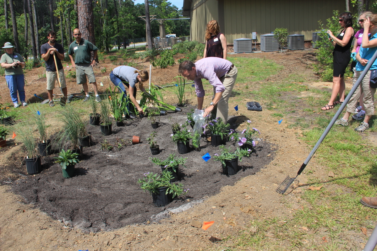 Rain Garden Design rain garden design Rain Garden For Professionals