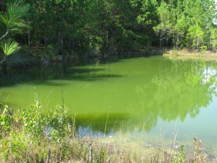Planktonic algae conditions and control options for Green pond water