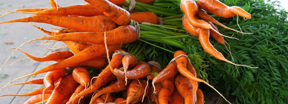 Vegetable List